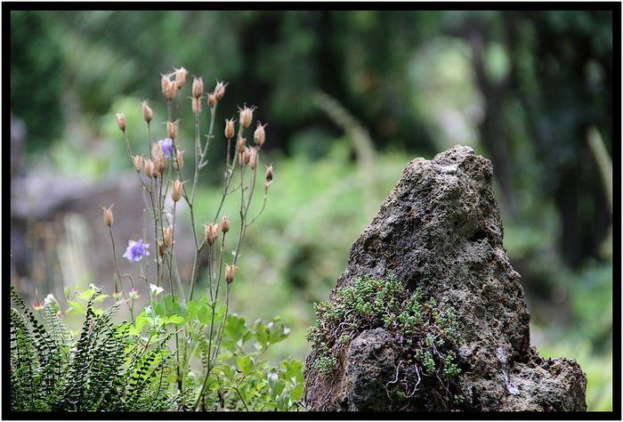 Fleursjardindesplantes 053