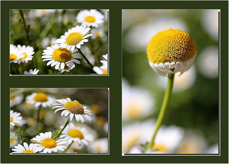 Margueriteparis