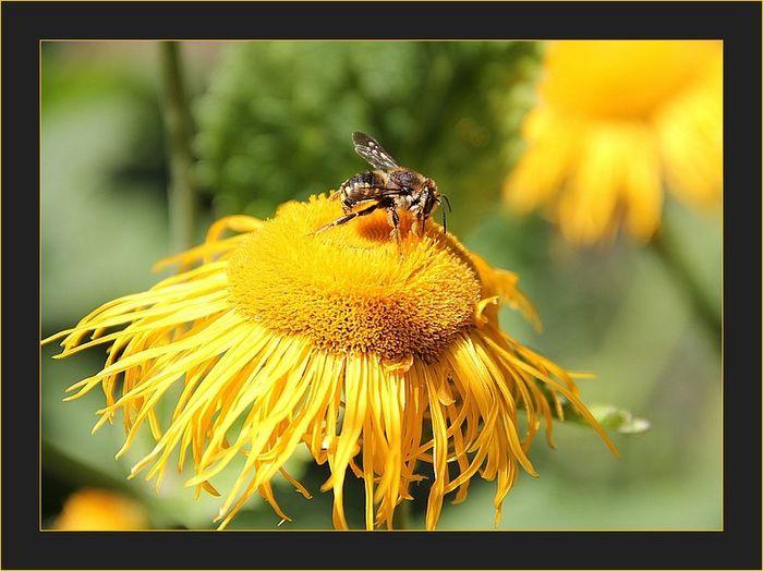 Insectefleurjaune