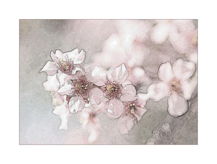 Prunusenfleursd