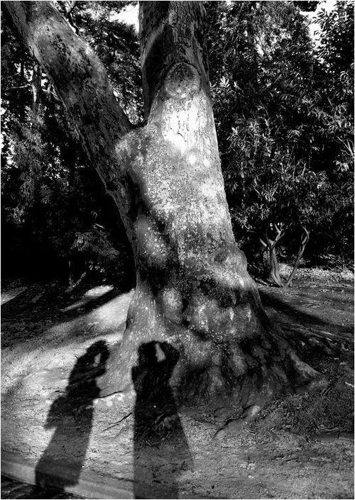 Au près demon arbre