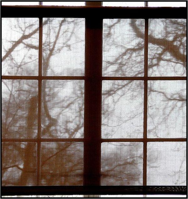 Fenêtres cernuschi5