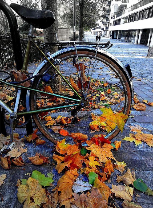 Vélo feuillesDSC02099