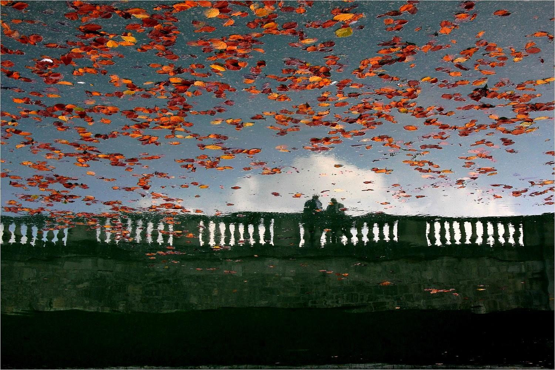 L'automne de la vie IMG_7385