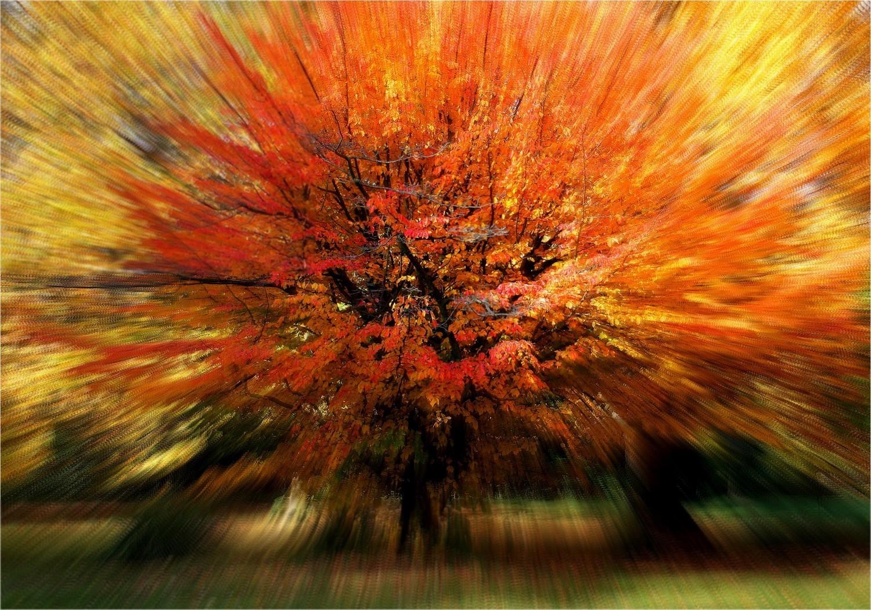 Zoom arbre automne