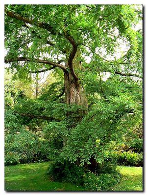 Metasquoia2