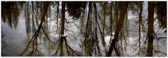 Reflets_arbres_1