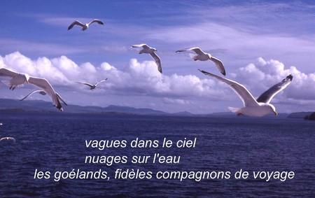 Vol_de_golands