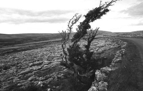 Burren7